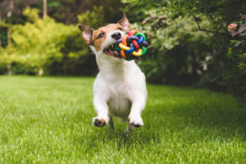 Pet Expenses: How Much Do Pets Cost Us? | SelectQuote Blog