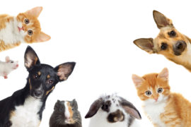 5 Significant Health Benefits of Having Pets | SelectQuote Blog